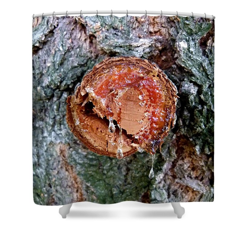 Tree Sap Shower Curtain featuring the photograph Tree Sap by Will Borden