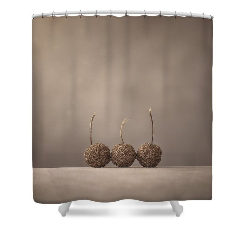 Seed Pod Shower Curtain featuring the photograph Tree Seed Pods by Scott Norris