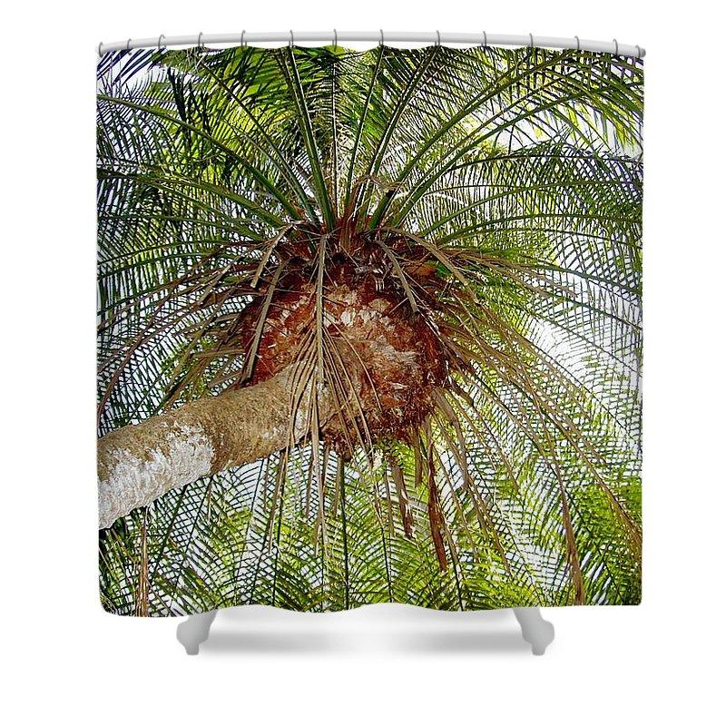 Tree Shower Curtain featuring the photograph Tree Spray by Deborah Crew-Johnson