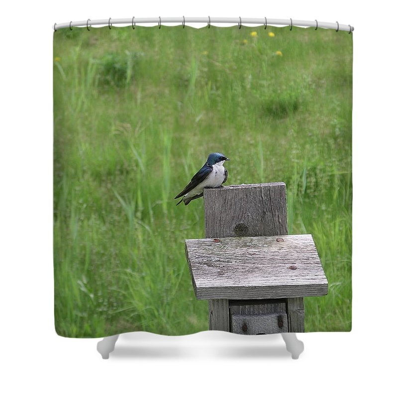 Bird Shower Curtain featuring the photograph Tree Swallow 1 by Rich Bodane