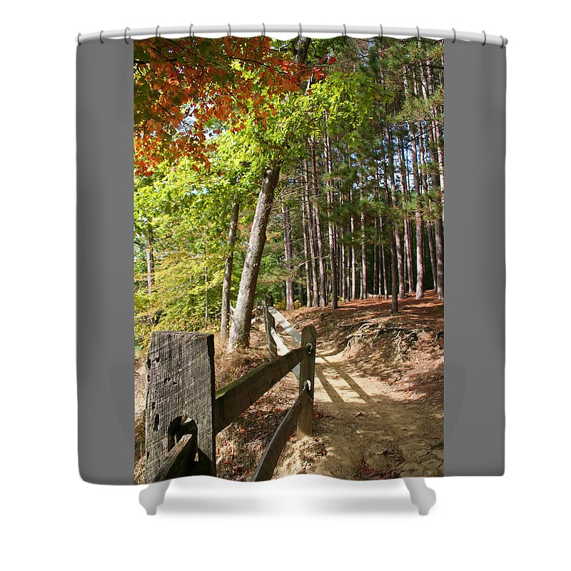 Tree Shower Curtain featuring the photograph Tree Trail by Margie Wildblood