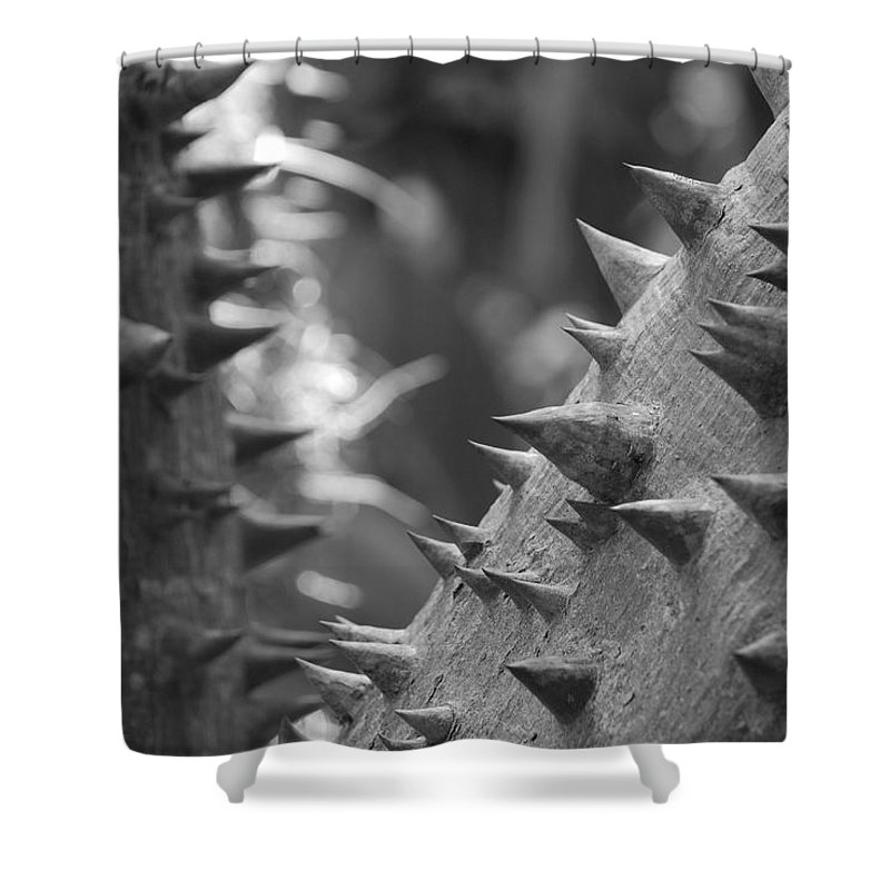 Spike Shower Curtain featuring the photograph Tree With Spikes And Thorns by Rob Hans