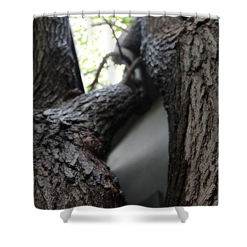 Shower Curtain featuring the photograph Tree by Yasir Alhaiek