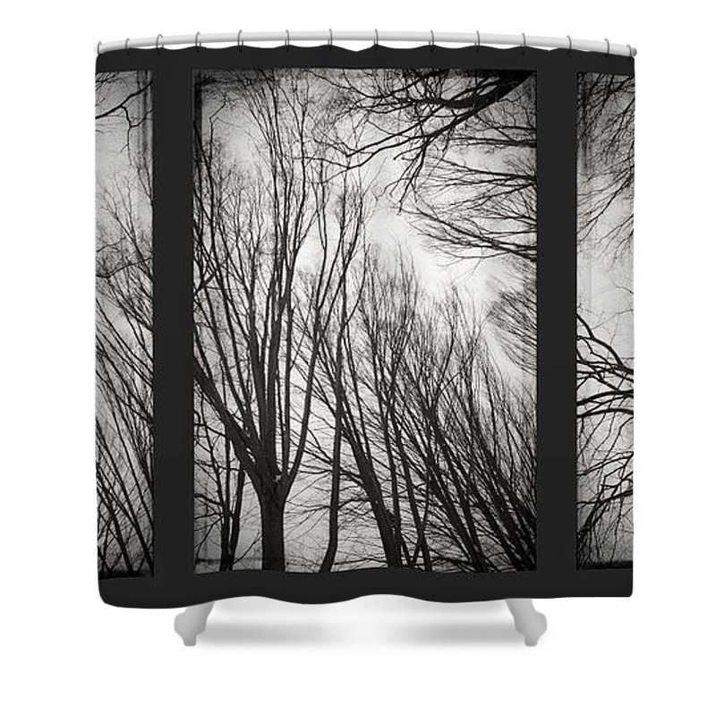 Black&white Shower Curtain featuring the photograph Treeology by Dorit Fuhg