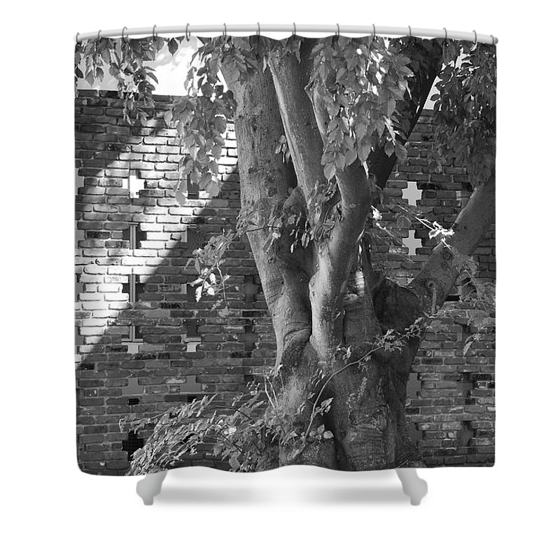 Trees Shower Curtain featuring the photograph Trees And Brick Crosses by Rob Hans