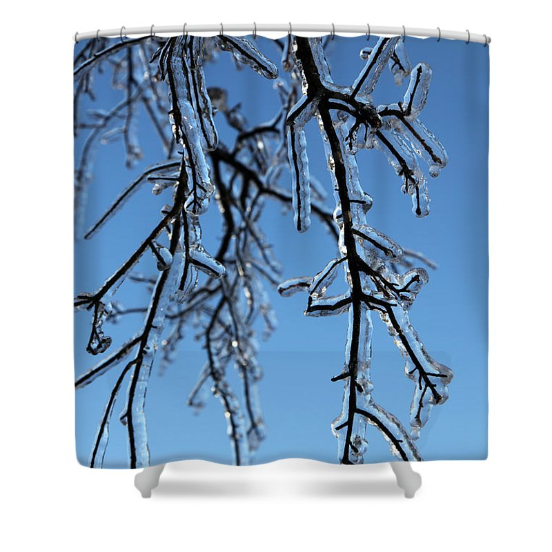 Tree Shower Curtain featuring the photograph Trees In Ice by Amanda Barcon