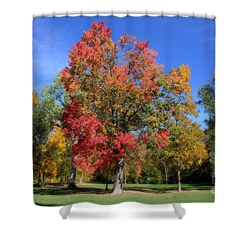Grand Bend Shower Curtain featuring the photograph Tree's In The Forest 4 by John Scatcherd
