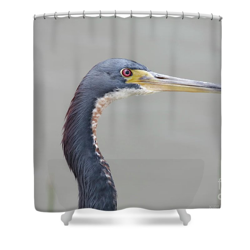Tri Colored Shower Curtain featuring the photograph Tri Colored Heron by Deborah Benoit
