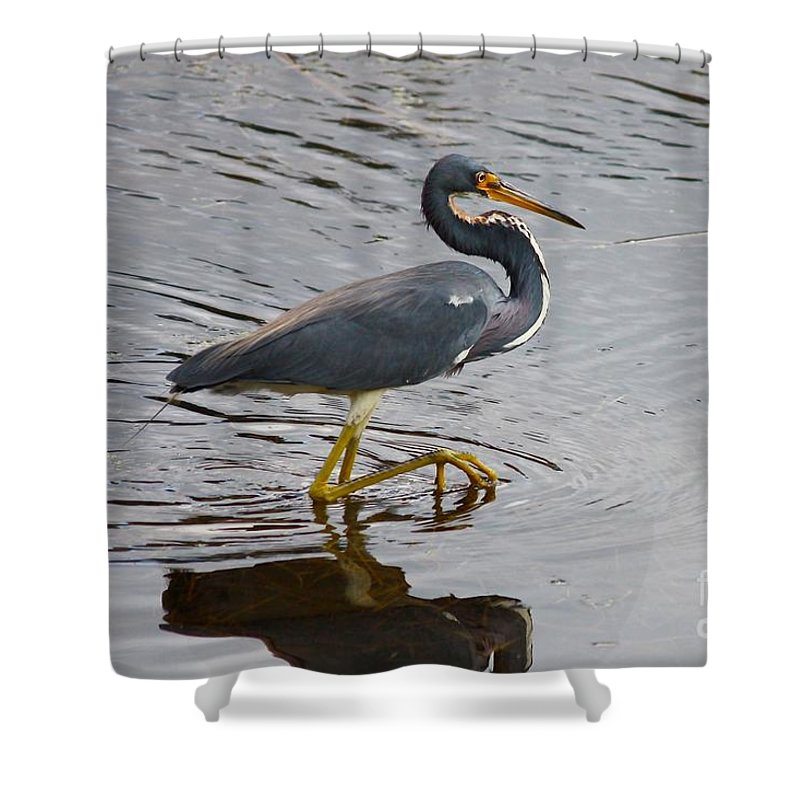 Bird Shower Curtain featuring the photograph Tri-colored Heron Wading In The Marsh by Carol Groenen