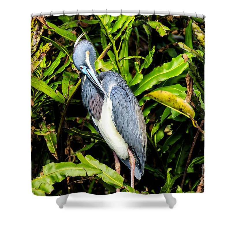 Tricolored Heron Shower Curtain featuring the photograph Tricolored Heron 3 by Ben Graham