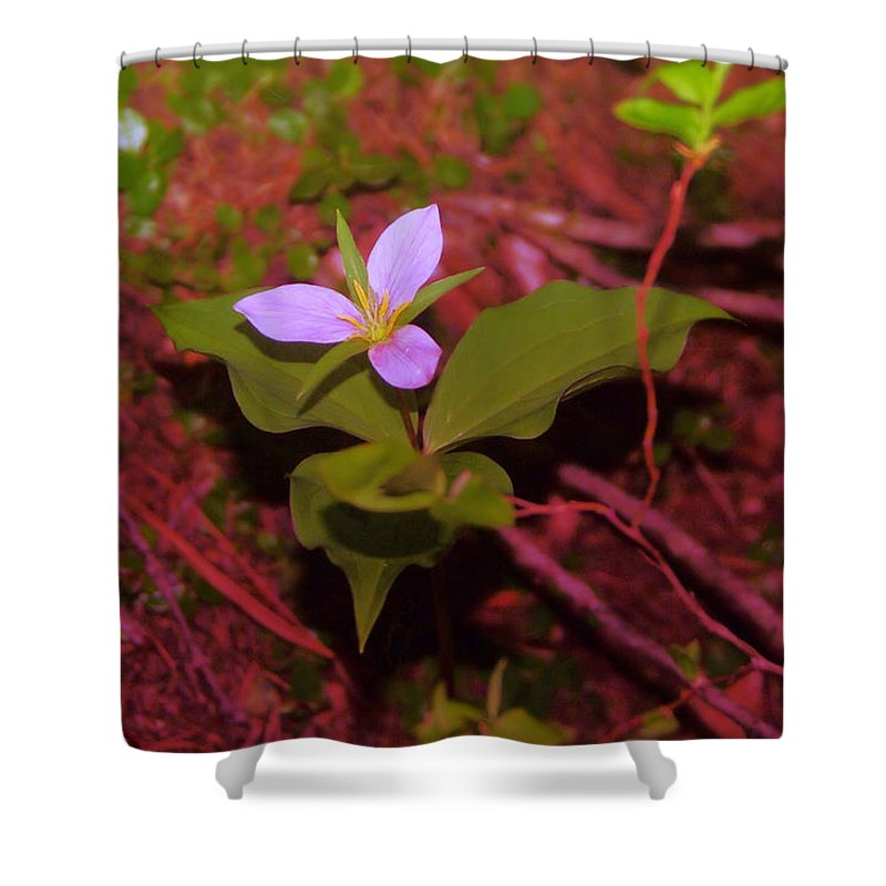 Flowers Shower Curtain featuring the photograph Trilliam by Jeff Swan