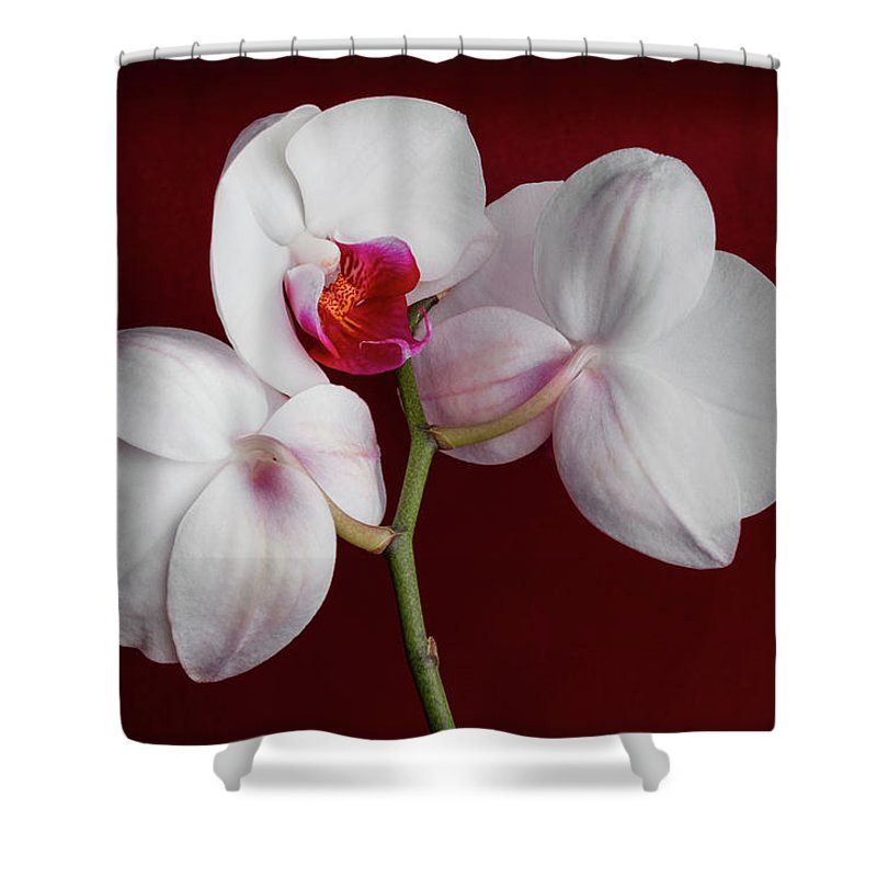 Flower Shower Curtain featuring the photograph Trio Of Orchids by Tom Mc Nemar