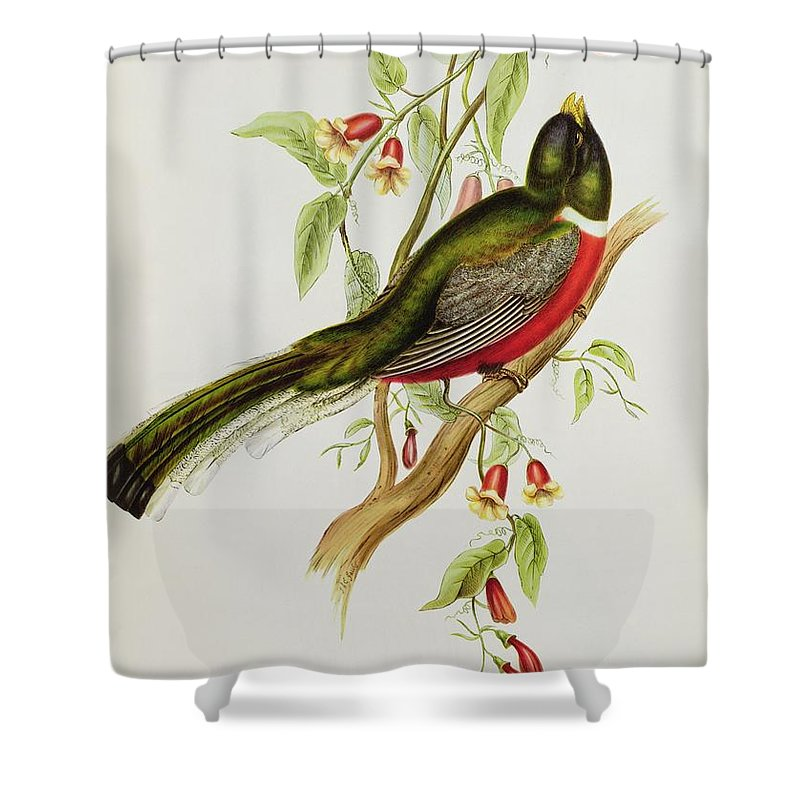 Trogon Shower Curtain featuring the painting Trogon Ambiguus by John Gould
