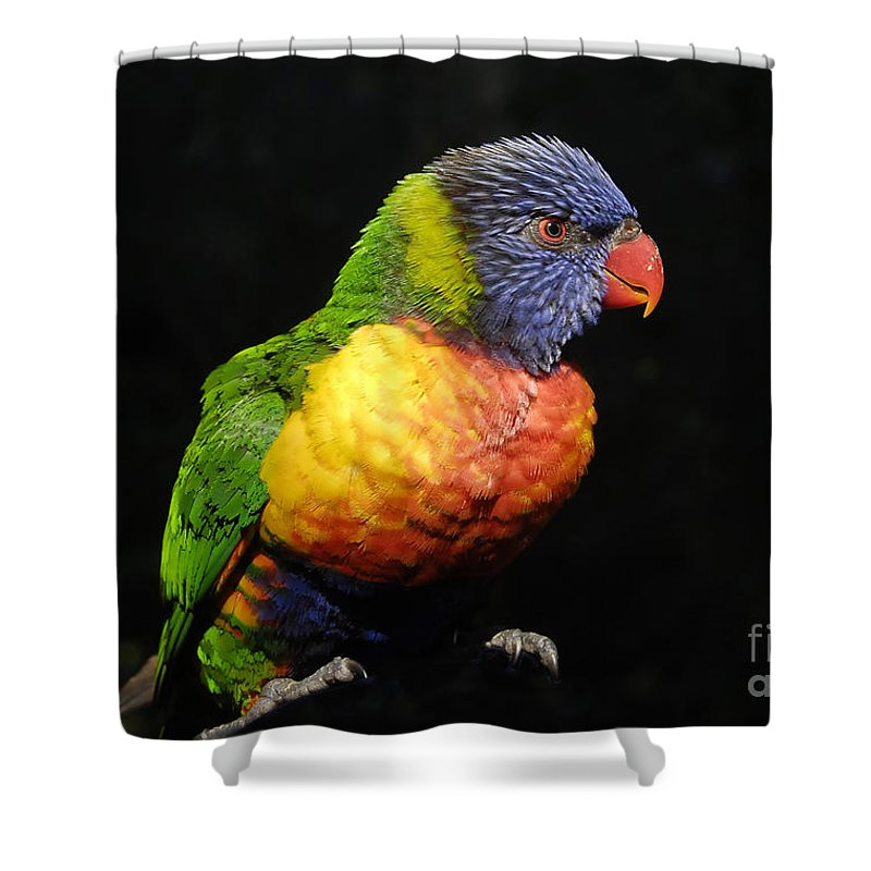 Tropical Shower Curtain featuring the photograph Tropical Colors by David Lee Thompson