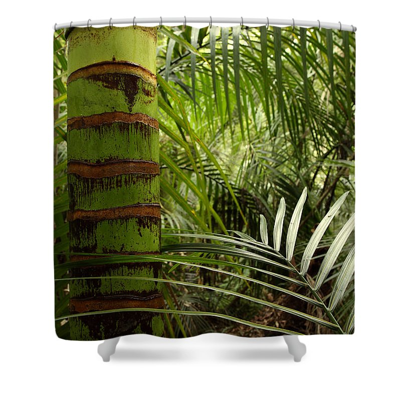 Bush Shower Curtain featuring the photograph Tropical Forest Jungle by Les Cunliffe