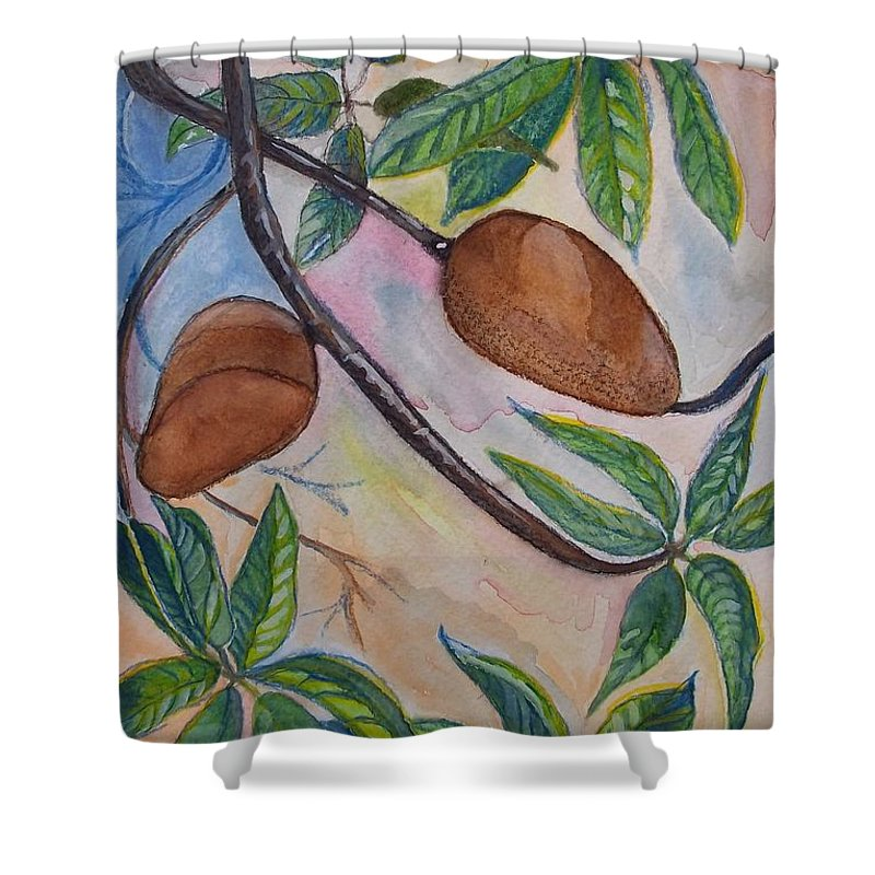 Fruit Shower Curtain featuring the painting Tropical Fruit Mamey by Jose Hau