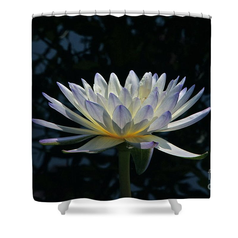 Waterlily Shower Curtain featuring the photograph Tropical Glow by Byron Varvarigos
