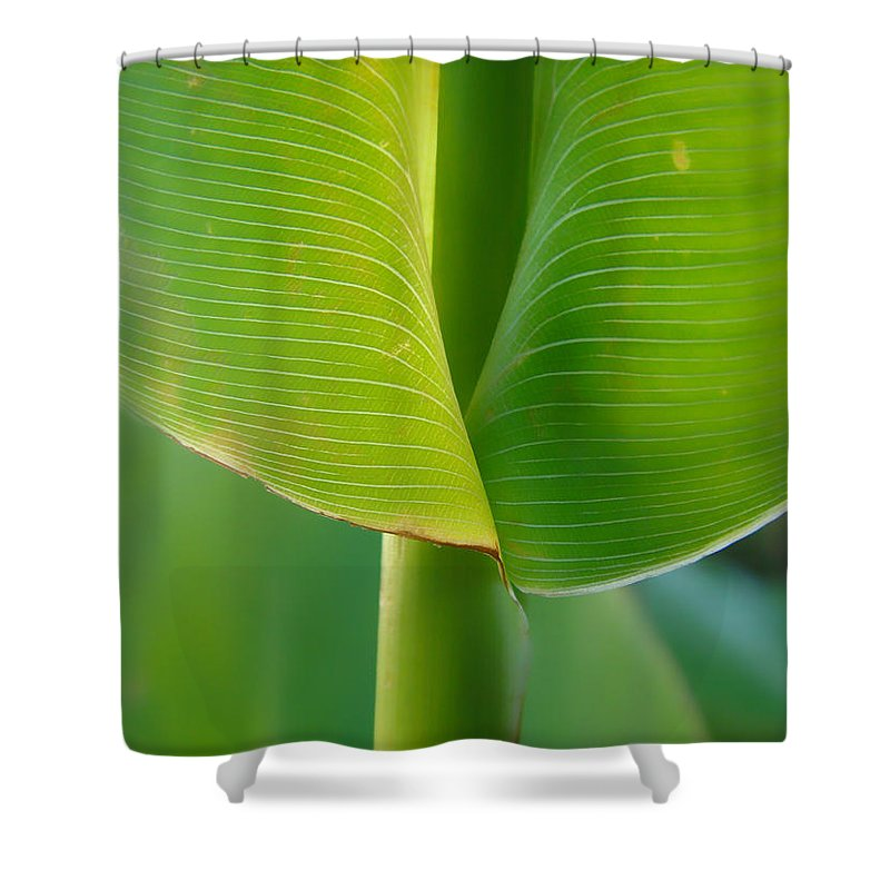 Tropical Shower Curtain featuring the photograph Tropical Green by Donna Blackhall