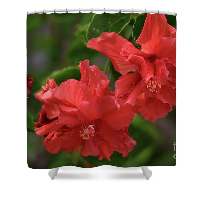 Tropical Hibiscus Rosa Sinensis Celia Double Red Shower Curtain For