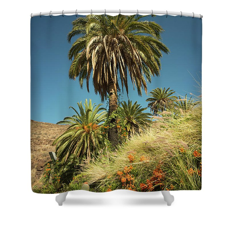 Palm Shower Curtain featuring the photograph Tropical Palm by Rob Hawkins