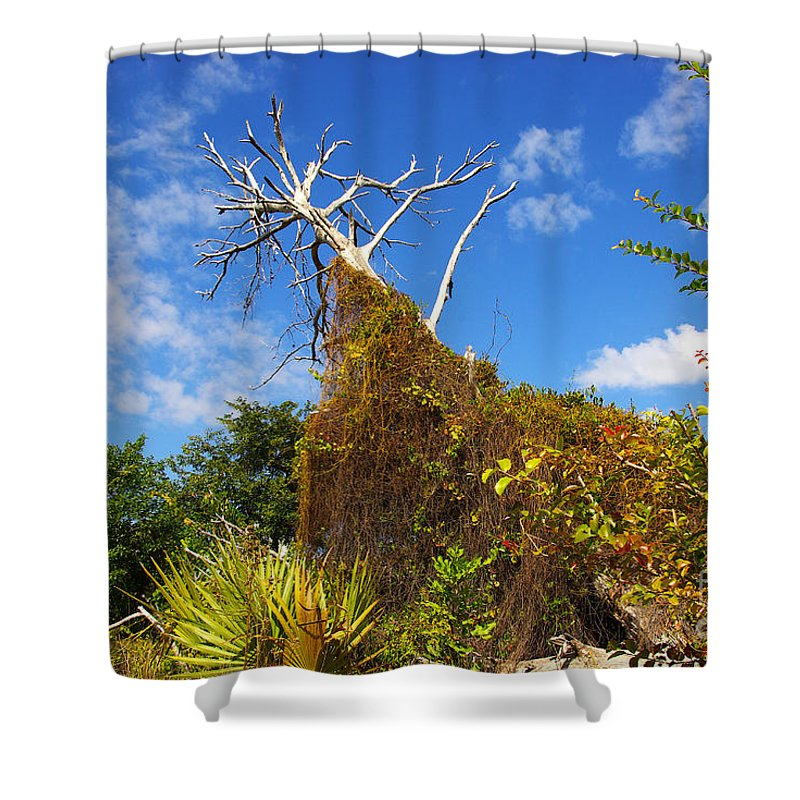 Shower Curtain featuring the photograph Tropical plants in a preserve in Florida by Zal Latzkovich
