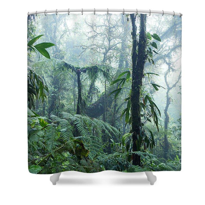 Tropical Rainforest - Monteverde Cloud Forest - Costa Rica Shower ...