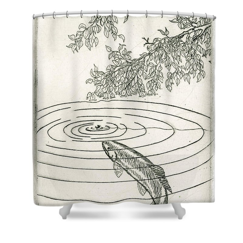 Charles Harden Shower Curtain featuring the drawing Trout Rising To Dry Fly by Charles Harden