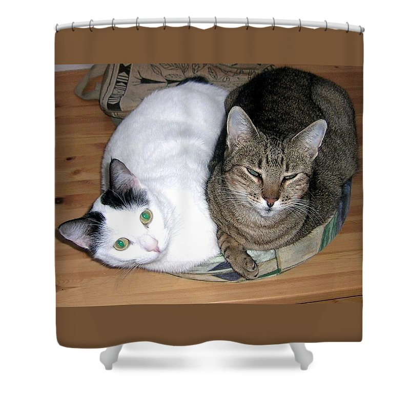 Cat Shower Curtain featuring the photograph True Love by Valerie Ornstein