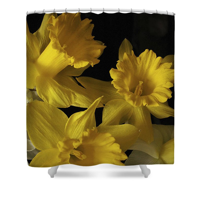 Macro Shower Curtain featuring the photograph Trumpet Daffodils by Nancy Griswold