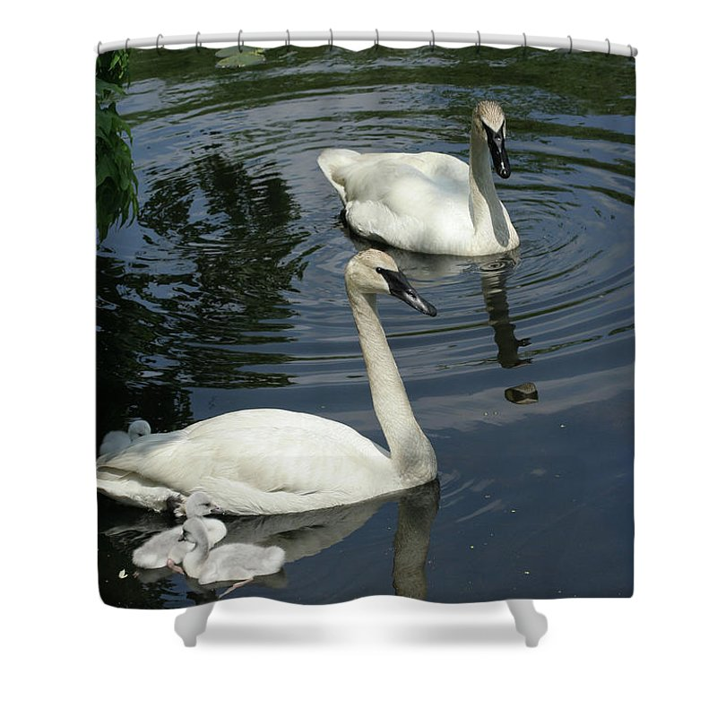Trumpeter Swans Shower Curtain featuring the photograph Trumpeter Swans by Judy Whitton
