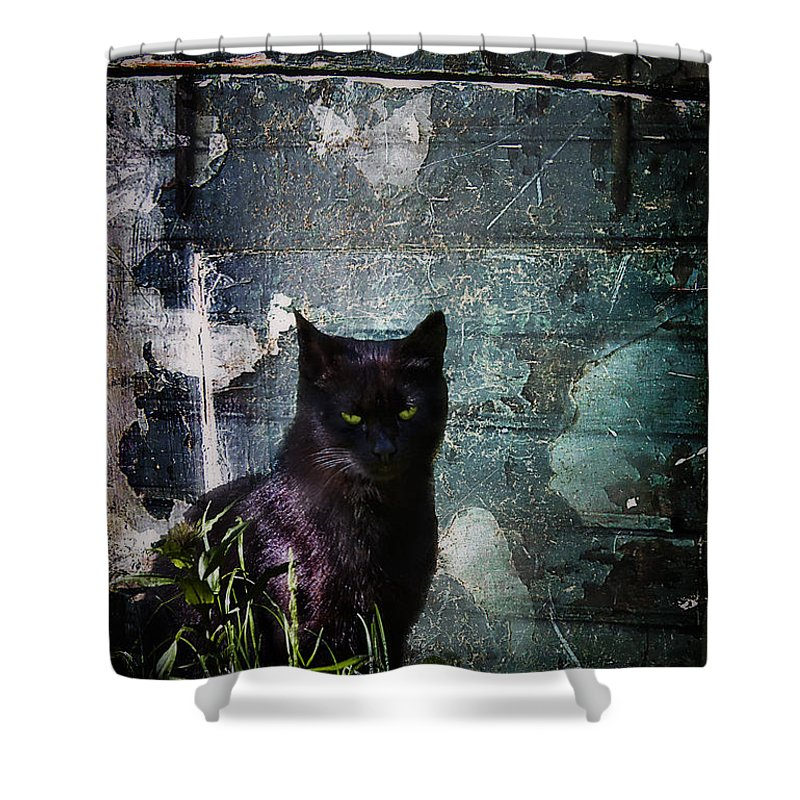 Dark Shower Curtain featuring the photograph Truth Or Stare... by Evelina Kremsdorf