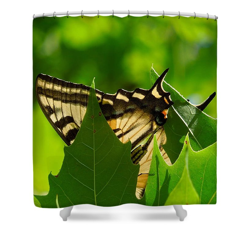 Insects Shower Curtain featuring the photograph Trying To Hide by Diana Hatcher
