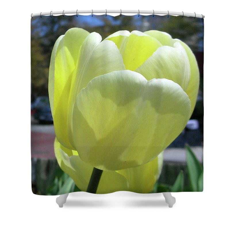 Flowers Shower Curtain featuring the photograph Tulip 0761 by Guy Whiteley