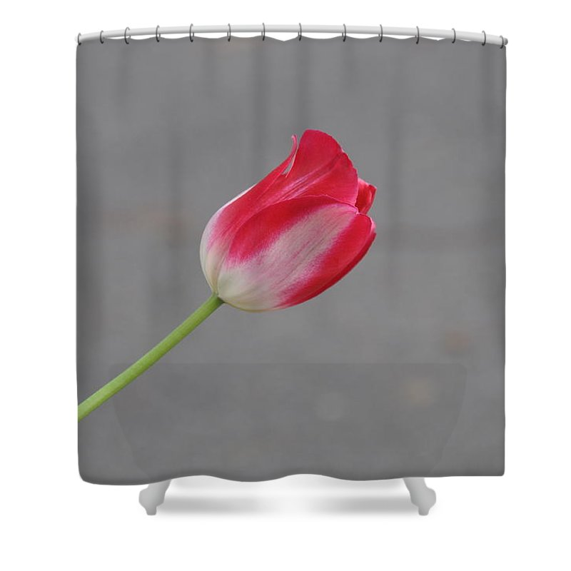 Flower Shower Curtain featuring the photograph Tulip 3 by Rich Bodane
