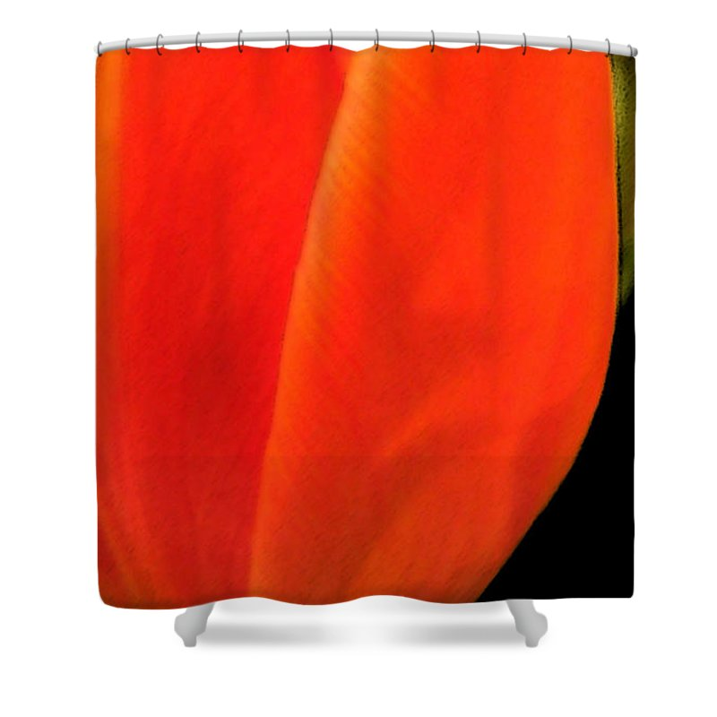 Tulips Shower Curtain featuring the photograph Tulip by Amanda Barcon