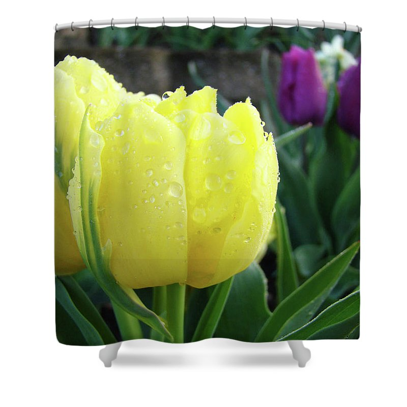 �tulips Artwork� Shower Curtain featuring the photograph Tulip Flowers Artwork Tulips Art Prints 10 Floral Art Gardens Baslee Troutman by Baslee Troutman