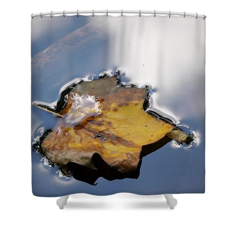 Floating Leaves Shower Curtain featuring the photograph Tulip Leaf On Water by Jane Ford