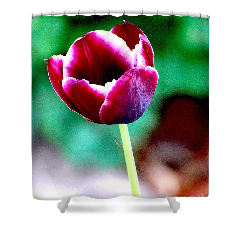 Digital Photo Shower Curtain featuring the photograph Tulip Me by David Lane