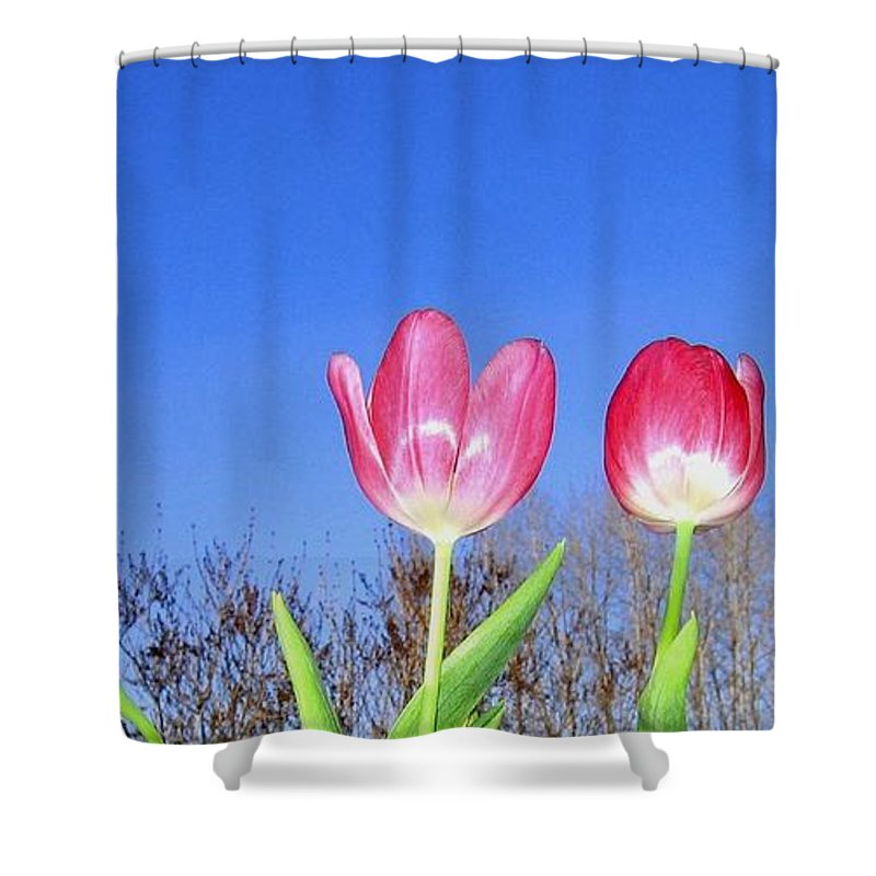 Tulips Shower Curtain featuring the photograph Tulip Panorama by Will Borden