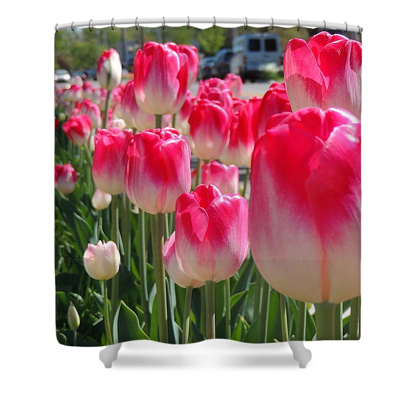 Tulip Time Shower Curtain featuring the photograph Tulip Time 2017 by Shon Saylor