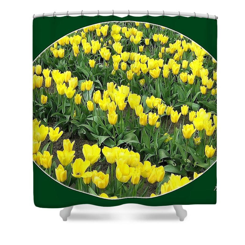 Agriculture Shower Curtain featuring the photograph Tulip Town 2 by Will Borden