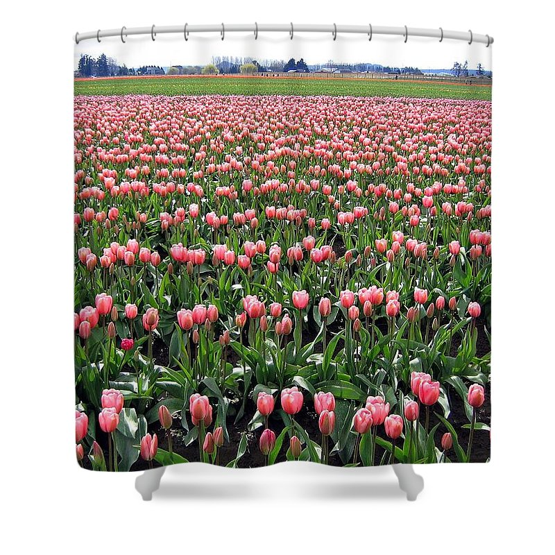 Agriculture Shower Curtain featuring the photograph Tulip Town 5 by Will Borden