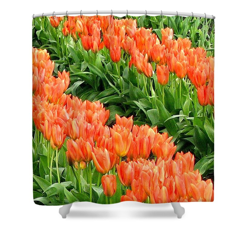 Agriculture Shower Curtain featuring the photograph Tulip Town 7 by Will Borden