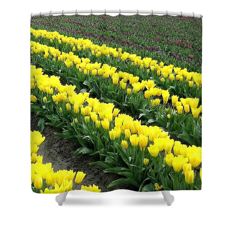 Agriculture Shower Curtain featuring the photograph Tulip Town 9 by Will Borden