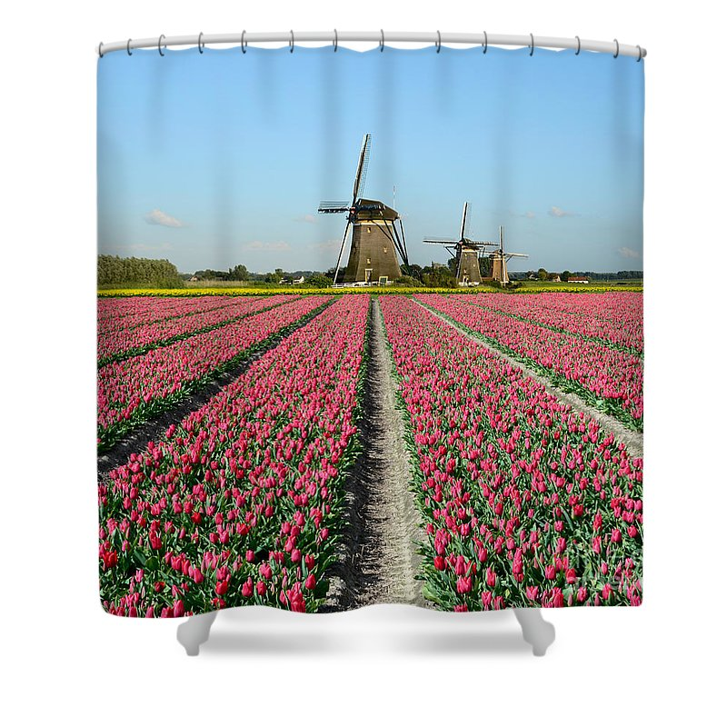 Tulips Shower Curtain featuring the photograph Tulips And Windmills In Holland by IPics Photography