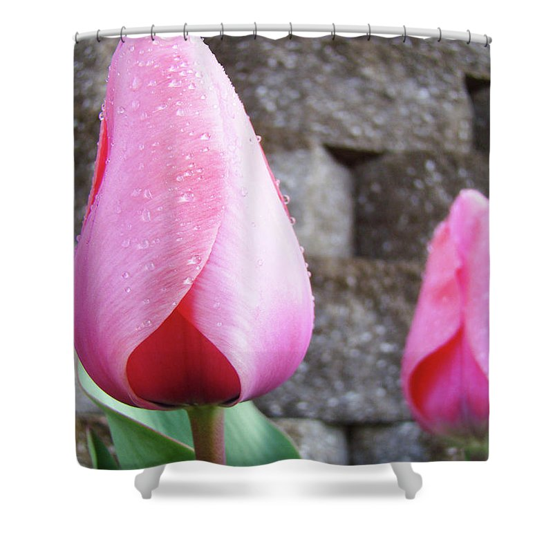 �tulips Artwork� Shower Curtain featuring the photograph Tulips Artwork Flowers 26 Pink Tulip Flowers Art Prints Nature Floral Art by Baslee Troutman