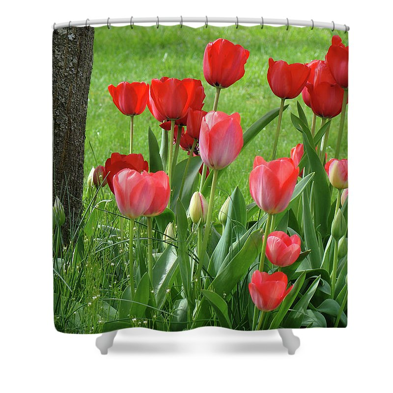 �tulips Artwork� Shower Curtain featuring the photograph Tulips Flowers Art Prints Spring Tulip Flower Artwork Nature Art by Baslee Troutman
