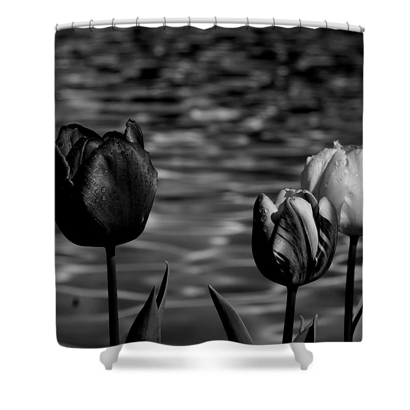 Tulips At Water Shower Curtain featuring the photograph Tulips In Black And White by Yuri Tomashevi