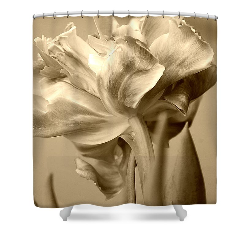 Tulips Shower Curtain featuring the photograph Tulips In Sepia by Donna Bentley