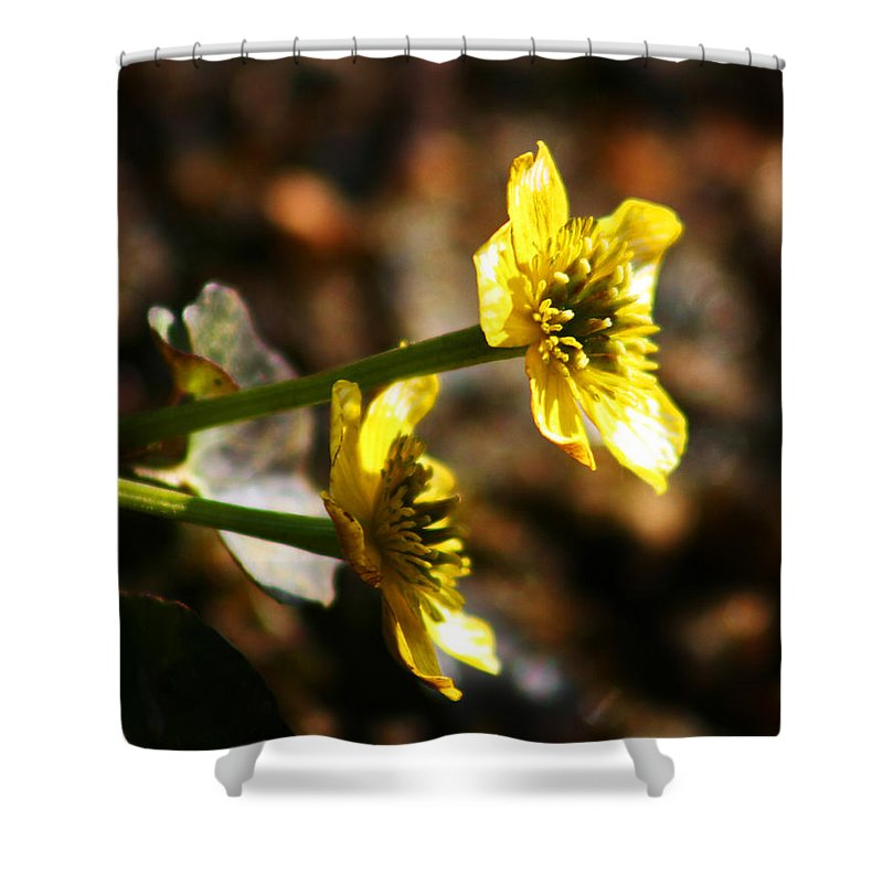 Wild Flowers Shower Curtain featuring the photograph Tundra Rose by Anthony Jones